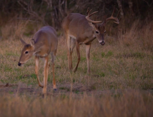 Managing Whitetail